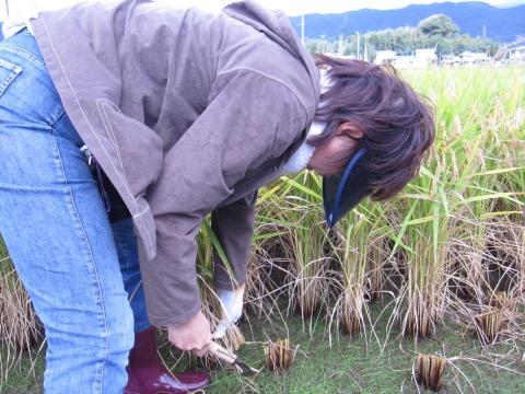 http://blog.shimatakara.jp/blog/IMG_7396-b.jpg